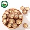 昌盛香菇批发 昌盛宝菇精品干香菇  4cm以上现货批发零售