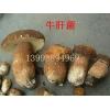 低价供应牛肝菌蘑菇、美味牛肝菌、大腿磨