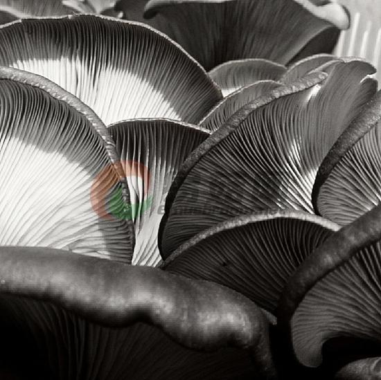 19-1 《静雅》+说明;蘑菇的层峦叠嶂。+作者:张绪栋