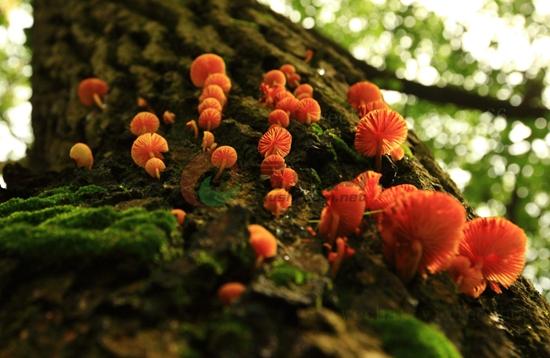 26-11 神奇菌类世界