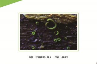 2016第三届中国食用菌摄影作品大赛 ()