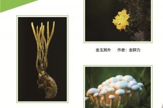 2016第三届中国食用菌摄影作品大赛 (1)
