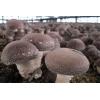 河北承德常年大量供应干,鲜香菇电话18231451885