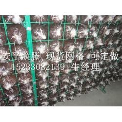 暢銷的蘑菇網架上哪買    :蘑菇網架