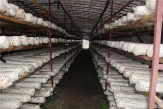 参观考察:随州市乐鲜农副产品种植专业合作社 (5)