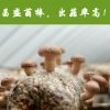 河南昌盛寶菇廠家專業定制高產出口級香菇菌包菌棒長期批發供應