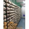 杏鲍菇养殖工厂