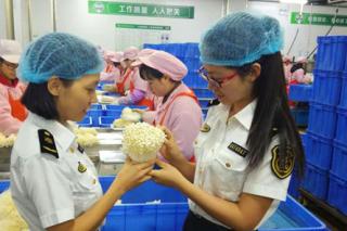 惠州14吨金针菇首次出口越南