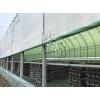 绿白膜pep利得膜香菇大棚专用食用菌专用膜中草药棚膜