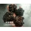 玛瑙菌 玛瑙菇 玛脑菌 玛脑菇 玛瑙菌产家厂家玛瑙菌 玛瑙菌
