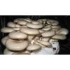 平菇节能环保灭菌设备