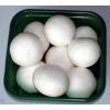 新鲜双孢菇供应