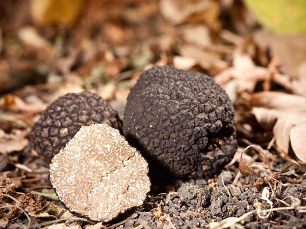 black-truffles600