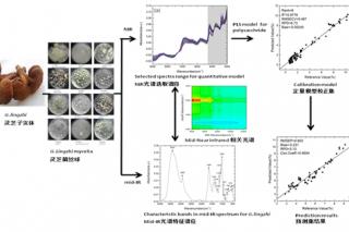 液体发酵灵芝菌丝体多糖光谱检测方法研究取得进展