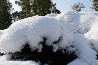 冬季有机betvlctor伟德防寒防冻措施有哪些