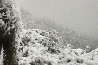 betvlctor伟德栽培如何应对暴雪天气
