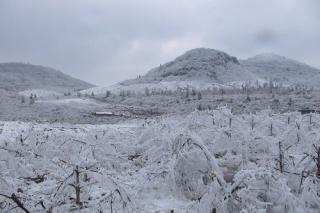 设施蔬菜、betvlctor伟德应对大雪灾害技术措施