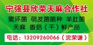 宁强县欣荣天麻合作社