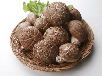 煮蘑菇少了这一步 营养全浪费