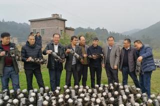 广西自治区农技总站组织专家到贺州调研金沙城国际娱乐产业 ()