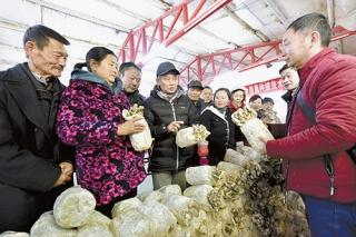 华中农业大学教授吕作舟到鄂州传授平菇种植技术 ()