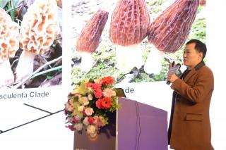 刘伟:羊肚菌大田栽培关键技术及香格里拉羊肚菌发展建议 (5)