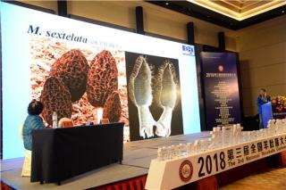 贺新生:羊肚菌栽培目前还没有一套完善的技术标准