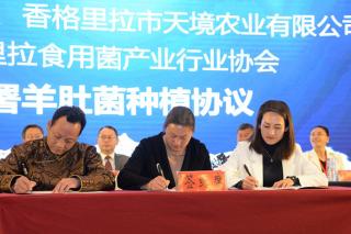 天境公司与维西县政府及香格里拉食用菌协会签订3000