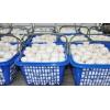 临汾双孢菇生产销售基地 临汾双孢菇长期供应 品质好