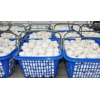 雙孢菇批發生產銷售廠家 雙孢種植基地