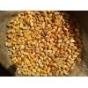 常年现款采购玉米大豆高粱碎米粕类等