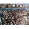 出口澳洲新西兰红黑大战菌棒,红黑大战栽培