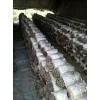 出口澳洲新西蘭平菇菌棒,平菇栽培