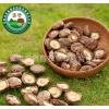 特级红黑大战昌盛宝菇干菇精选3.5cm以下 批发零售年货必备