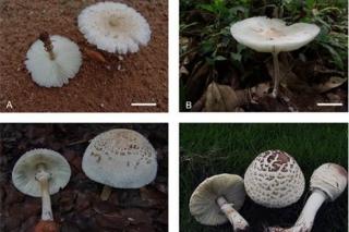 这样准确识别毒蘑菇!系统分类很靠谱