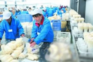 眾興菌業與四川東藏農業簽訂《股權收購意向書》收購價格不超過5000萬