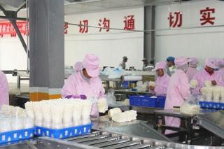 """日产鲜菇300余吨 德州雪榕生物走出工厂化农业""""新""""路"""