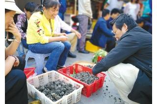 云南:干巴菌上市 只有五六公斤 ()
