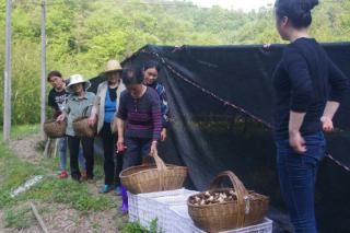 大山里走出的羊肚菌生产能手 ()