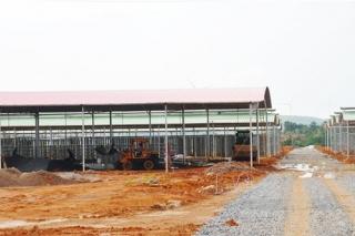 江华:总投资5000万 食用菌产业园初具规模 ()