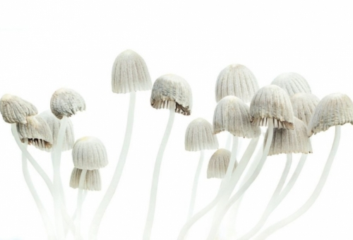How One Dose Of Magic Mushrooms Can Chan