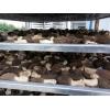 供应羊肚菌空气能烘干设备