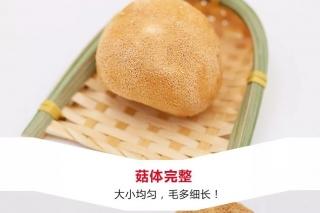 【易菇优选】产地直供 华裕新美福建猴头菇
