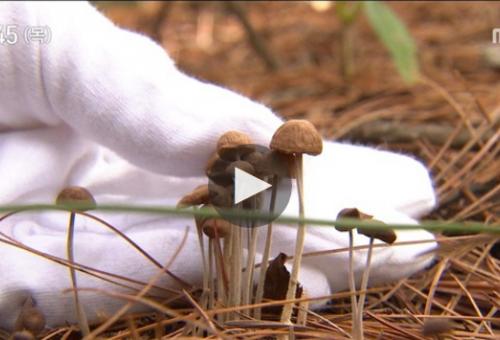 습한 여름철 쉽게 자라는 야생버섯… &#039