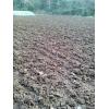 双孢菇干牛粪,杏鲍菇专用有机肥料,高温发酵牛粪,纯干烘干牛粪
