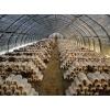 菌菇房环境控制系统,食用菌生产综合监控系统,远程自动化