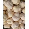 基地供应东北猴头菇鲜品