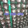 养菌网格架厂家杏鲍菇网格架食用菌菇架蘑菇网格架