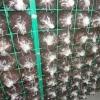 网格养菌出菇出菇架钢丝网培养架蘑菇养菌层架