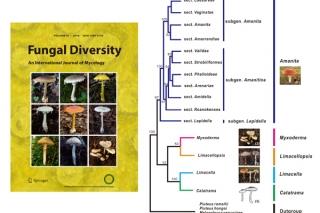 毒蘑菇大本营深度揭秘——构建鹅膏科家谱,实现物种精准识别